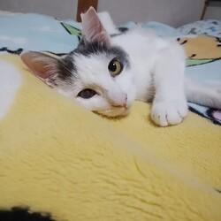 「猫の記憶力」サムネイル2