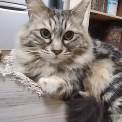 「猫の記憶力」サムネイル3