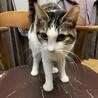 メス猫 1歳です♬︎