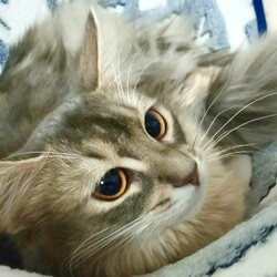 ❤︎キノちゃんの猫生❤︎