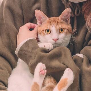 一緒に寝てくれる猫も人も大好きな茶白の男の子
