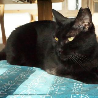 かしこい黒猫さん