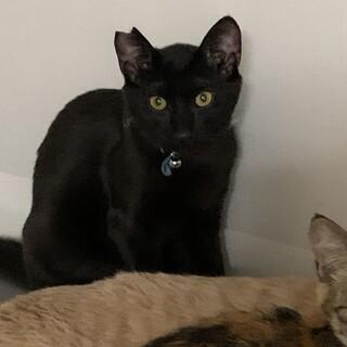 ちょっぴり怖がりな黒猫のクロちゃん
