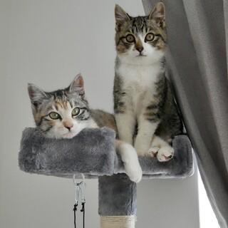 気の強いキジトラ姉妹