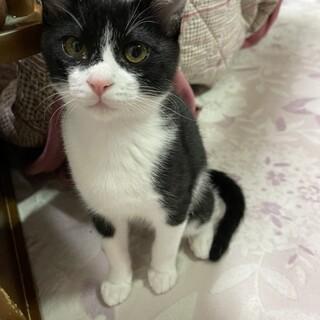[交渉中]シャイで甘えん坊な子猫が家族を待ってます