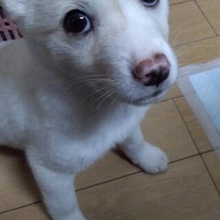 ミルク☆2ヶ月の家族を探してます。