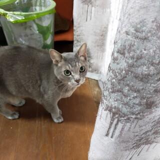 急募 やさしい猫ちゃん達です。可愛がってください。