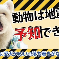 「犬は、地震を予知できる!?」サムネイル1