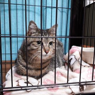 【緊急】浸水被害住居に残された猫たち①