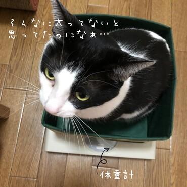 六郎の写真