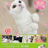 ペッツクローバー東大宮店「保護ネコ譲渡会」開催!