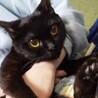 お目目ぱっちりおっとり黒猫子猫!うららかさん!
