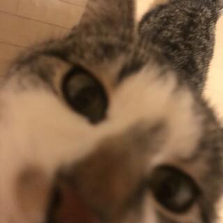 子猫の里親さん募集