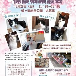 第14回保護猫譲渡会in山口県
