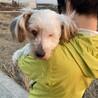 かれんちゃん~盲目の小型犬mix女のコ~ サムネイル2