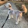 かれんちゃん~盲目の小型犬mix女のコ~ サムネイル3