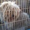 かれんちゃん~盲目の小型犬mix女のコ~ サムネイル7