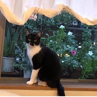 黒白オス猫ちゃん