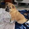 12月10日寒波の中で生まれた仔犬