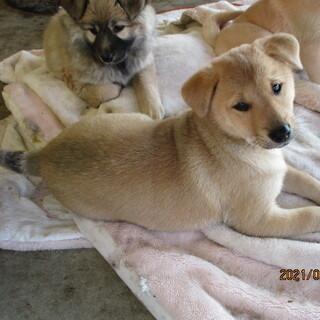 12月10日寒波の中で生まれた仔犬(茶色♀)