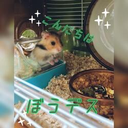 「癒されるー(*^ω^*)」サムネイル1