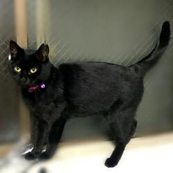 「黒猫さん 備忘録6」サムネイル1