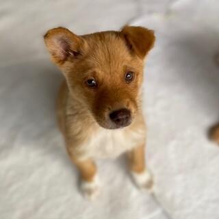 かっこ可愛い子犬の兄弟です。家族募集中!