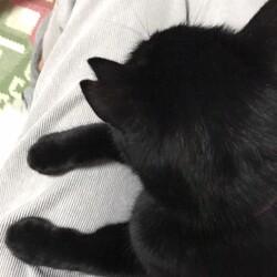 黒猫さん 備忘録7