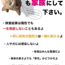 「祝☆エイズの猫に里親決定!」サムネイル2