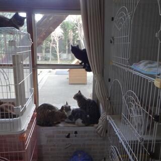 沢山の猫たちがお迎えを待っています