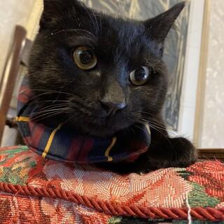 生後半年くらいの黒猫の男の子