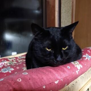 推定4〜5才の黒猫オス
