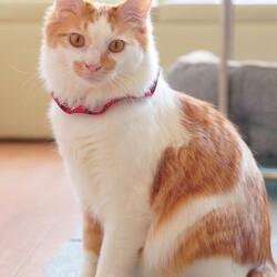 ソイくんは猫とケージが嫌い