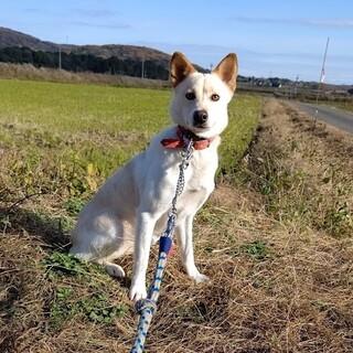3/7船橋市譲渡会参加犬☆美犬のキャシーちゃん♪