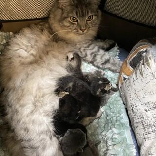 3月5日生まれ 子猫6匹 里親募集中です
