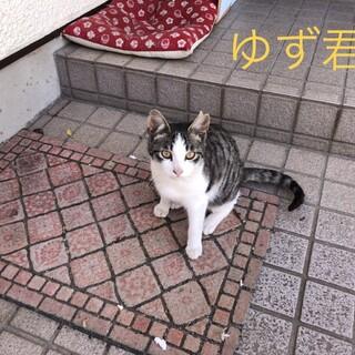 可愛い子猫ちゃん3匹+1歳猫1匹