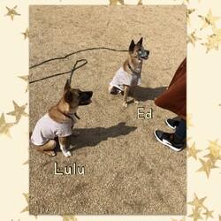 「Luluちゃん、色々練習中!」サムネイル2