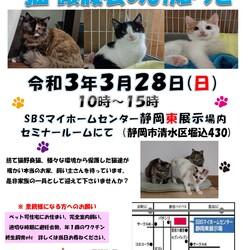 保護ニャンコの譲渡会by静岡市清水区