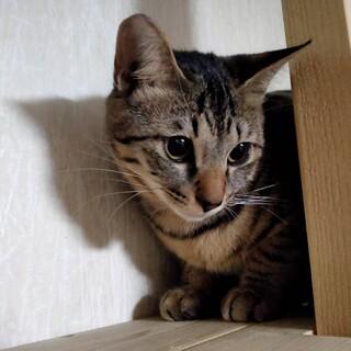 大阪藤井寺お見合い会参加猫