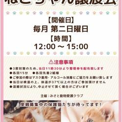 ◆ねこちゃん譲渡会◆みさと動物愛護クラブ