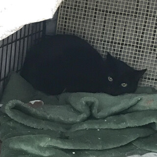 黒猫 メス すみちゃん
