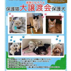 保護猫 保護犬の大譲渡会