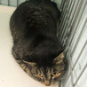 助けてください❗️幸せになりたい美猫なキジトラ女子 サムネイル3