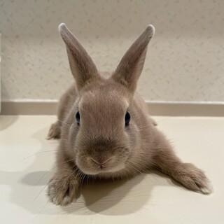 生後1ヶ月半の子ウサギです。
