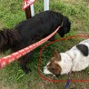 両親が残した犬(推定10才くらい:もっと若いかも) サムネイル2