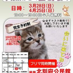 猫の譲渡会in加古川 3/28(日) 4/25(日)