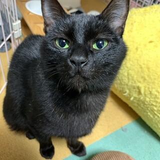 グリーンの瞳の黒猫たおちゃん