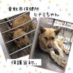 「ハンデに負けないヒナミちゃん→譲渡決定!」サムネイル2