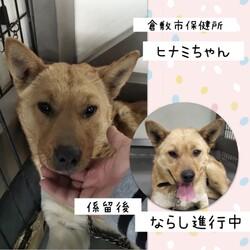「ハンデに負けないヒナミちゃん→譲渡決定!」サムネイル3
