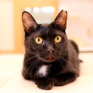 スリゴロで白いビキニ柄が可愛い黒猫くまちゃん